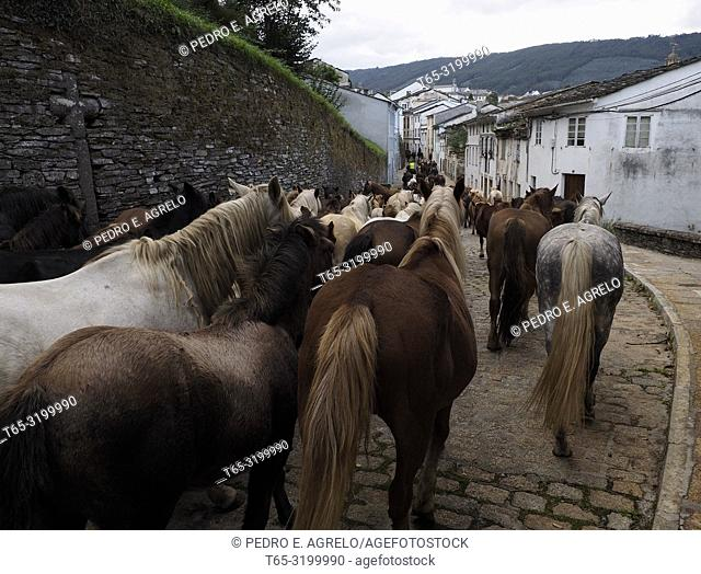 Mondoñedo, Lugo.- San Lucas 2017.- Cabalar Fair.- Descent of wild horses, at the start of the As San Lucas festivities. Since the XII century it has been...