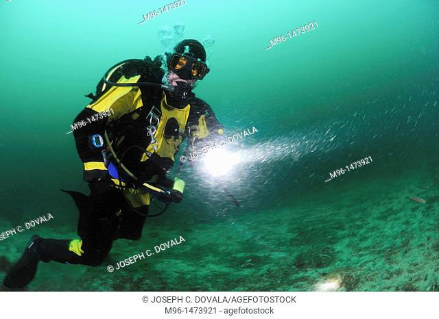 Scuba diver with dive light, Santa Cruz Island, California, USA