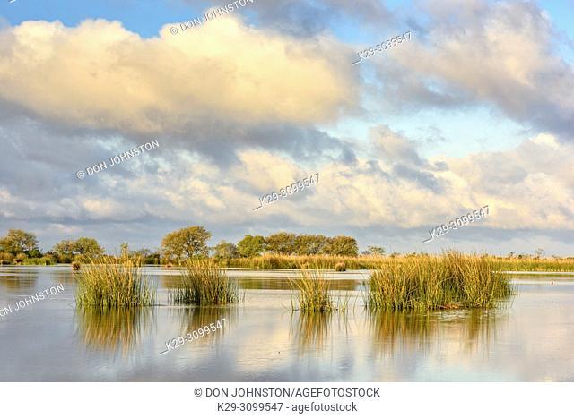 Marsh grasses in a wetland near Lake Pontchartrain, Fontainebleau State Park, Louisiana, USA
