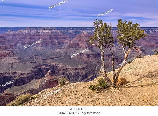 The USA, Arizona, Grand canyon National Park, South Rim, Powell Point