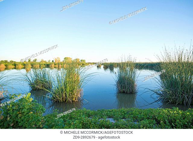 Wetlands at Natomas Basin near Sacramento offer ideal habitat