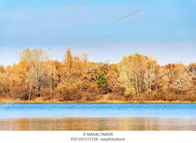 Warm view of trees close to the Dnieper river in autumn, a green fir stands out on the middleof the forest