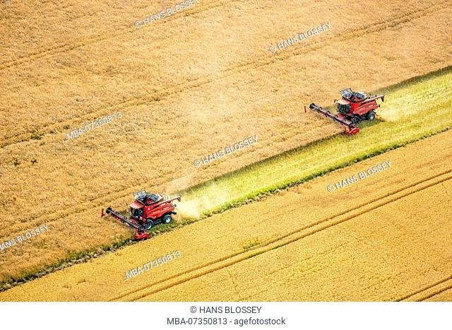 Grain harvest, driving combine harvester during harvest, agriculture, Vipperow, Mecklenburg Lake District, Mecklenburg-Vorpommern, Germany
