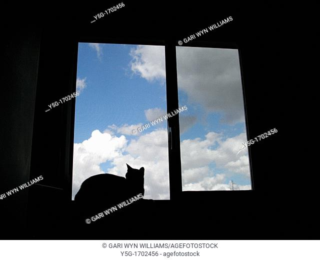 one cat sitting on window sill in house