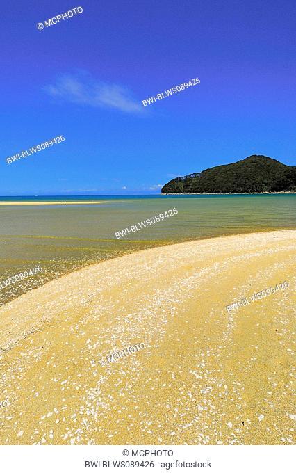 seashells at the beach of Bark Bay, Abel Tasman National Park, New Zealand, Southern Island