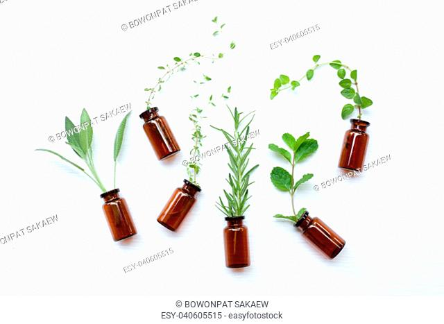 Top view, Bottle of essential oil with herbs sage, rosemary, oregano, mint, thyme and lemon thyme on white background