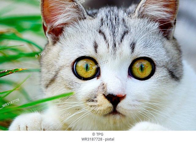 portrait; close up of cat face