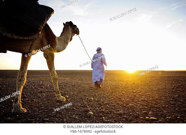 Nomad Berber with his dromedary in the Sahara desert, Morocco