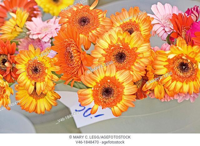 Orange gerberas in florist buckets  Cut flowers in public market