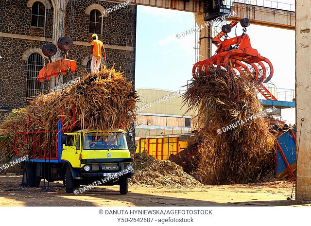 unloading truck with sugarcane, Médine Sugar Factory, Médine, Black River, Mauritius, Africa