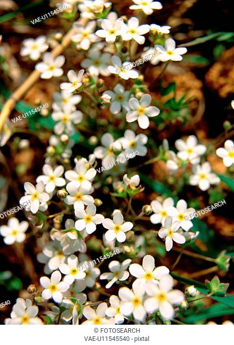 plant, flowers, flower, plants, film