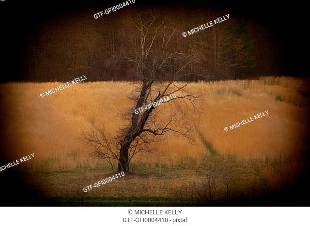Leafless solitary tree in yellow feild with vignette