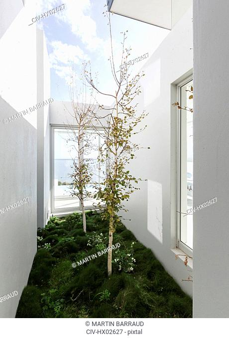 Trees in sunny luxury home showcase interior courtyard