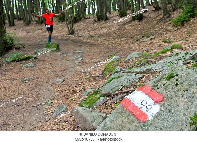 grande escursione appenninica gea 00, foreste casentinesi national park, italy