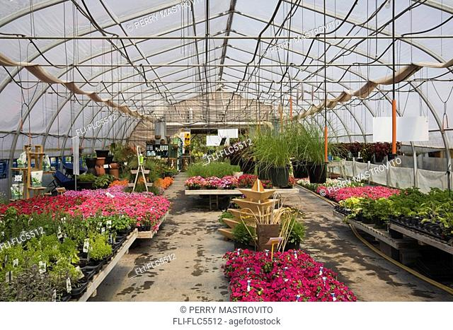 Plant production inside a commercial greenhouse, Quebec, Canada