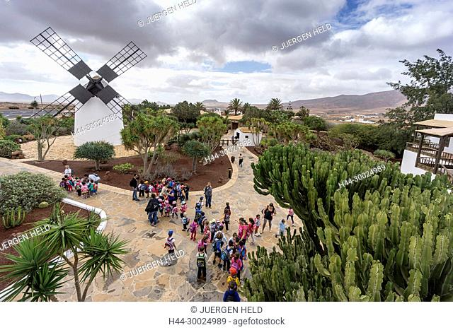 Molina de Antigua, Windmill, School Class, Fuerteventura, Canary Islands, Spain