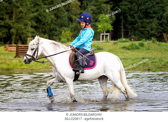 Welsh Mountain Pony, Section A. Girl on grey gelding walking through water during a cross-country ride. Germany