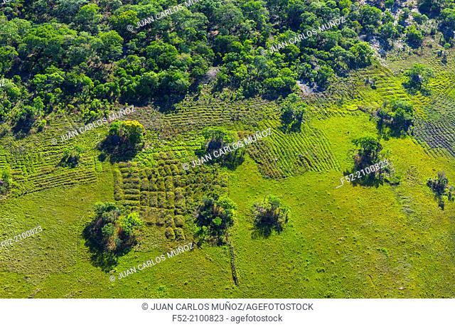Kasanka National Park, Serenje, Provincia central, Zambia, Africa