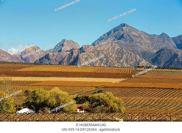 Matroosberg Mountains With Vineyards