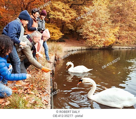 Multi-generation family feeding swans at pond in autumn park