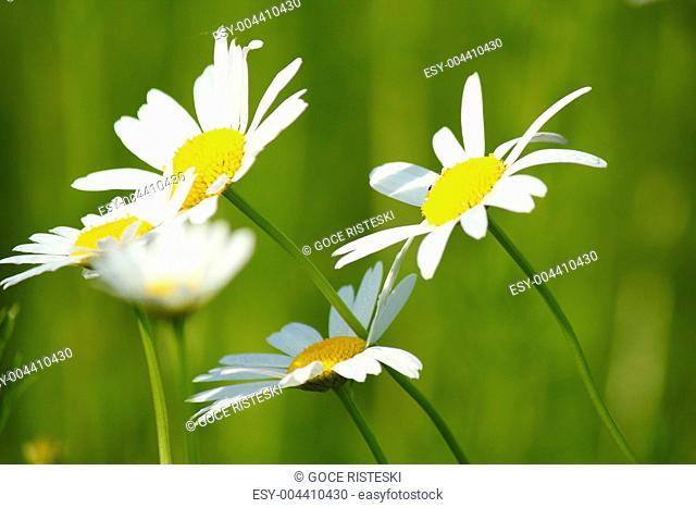 white flowers spring scene