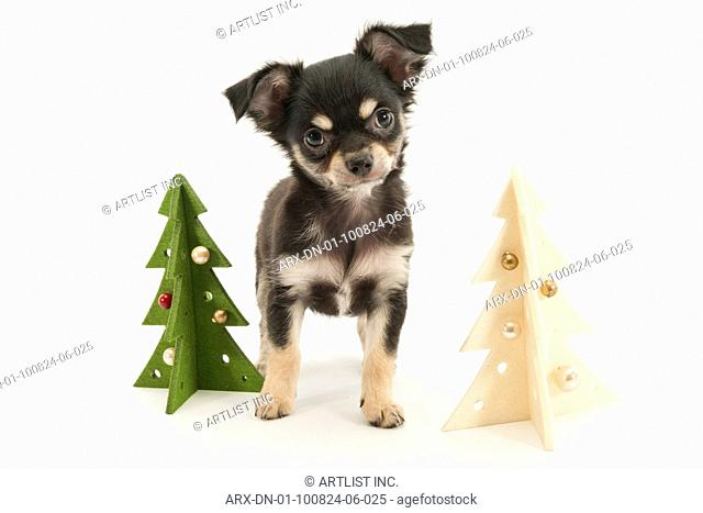 A puppy and christmas trees