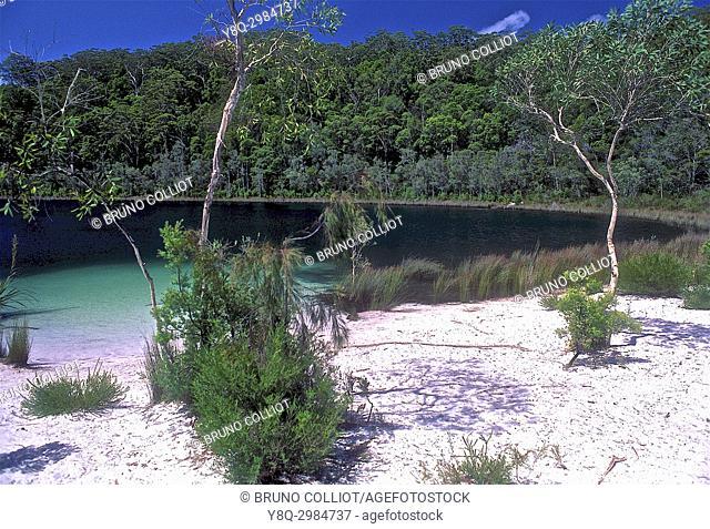 rain forest, frazer island queensland, Australia