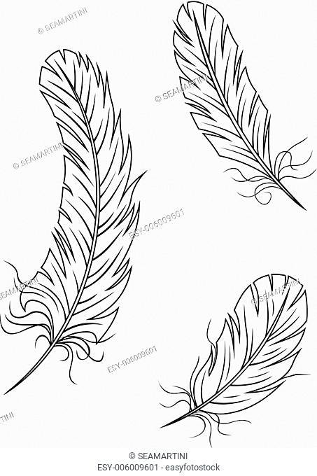 Isolated feathers and quills on white background for medieval or education concept design