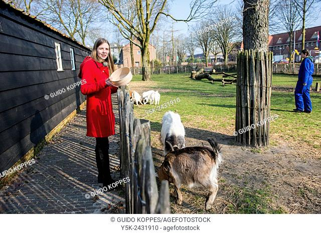 Tilburg, Netherlands. Female volunteer to a daycare centre for mentally challenged people monitoring the animals in the petting farm
