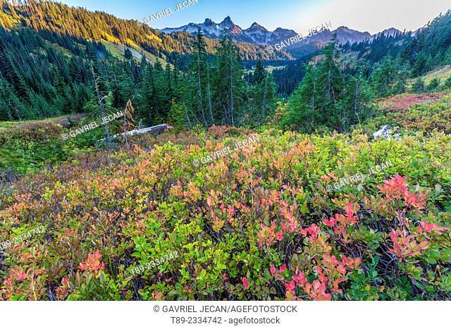 Wildflowers and mountain landscape, Mt. Rainier, Washington, USA