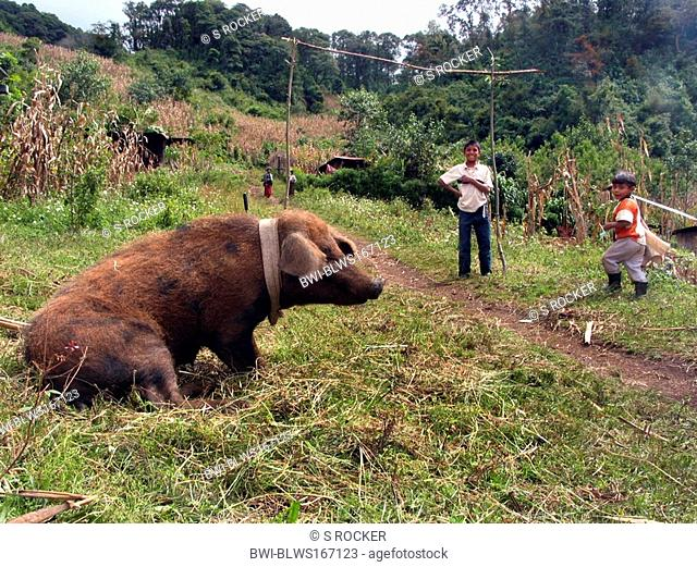 Mayan village close to Nebaj with big pig and football pitch, Guatemala, Quiché, Nebaj