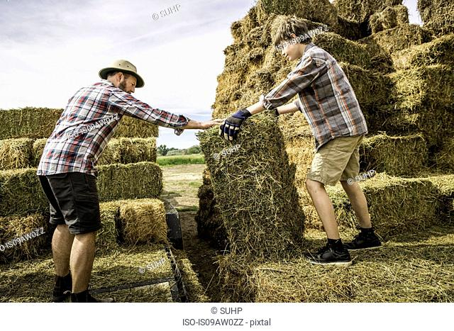 Side view of mature man and boy moving hay bale
