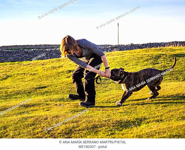 An adult woman playing with a young dog of the American staffordshire breed in countryside in springtime