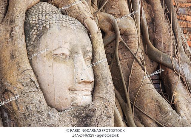Buddha Head in the Wat Maha That temple in Ayutthaya, Thailand