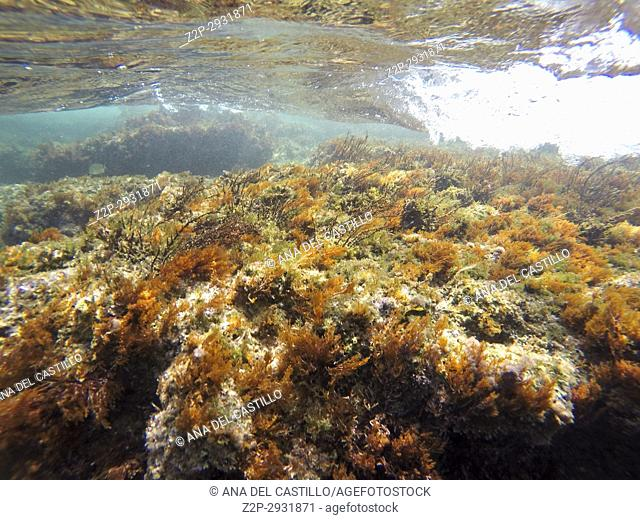 Underwater image Las Rotas nature reserve Denia Alicante Spain