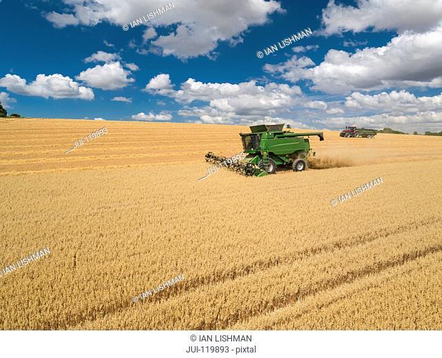 Harvest aerial of combine harvester cutting summer oats field crop under blue sky on farm