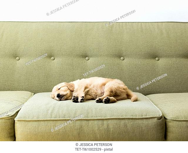 Puppy sleeping on sofa