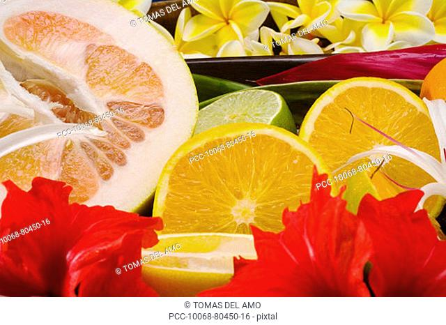 Studio shot of a variety of citrus fruit cut in slices, with flowers