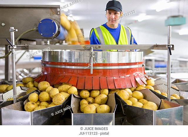 Worker watching potato sorting on production line in factory