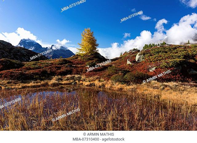 Autumn at 2300 meters above sea level at the Crap Alv Lajets on the Albula Pass, canton of Grisons, Switzerland