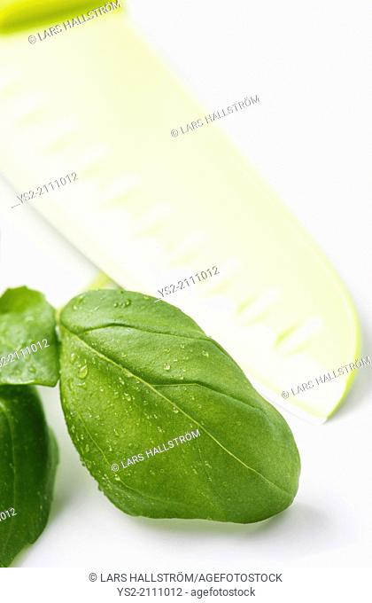 Closeup of fresh basil leaves with water droplets and a green knife