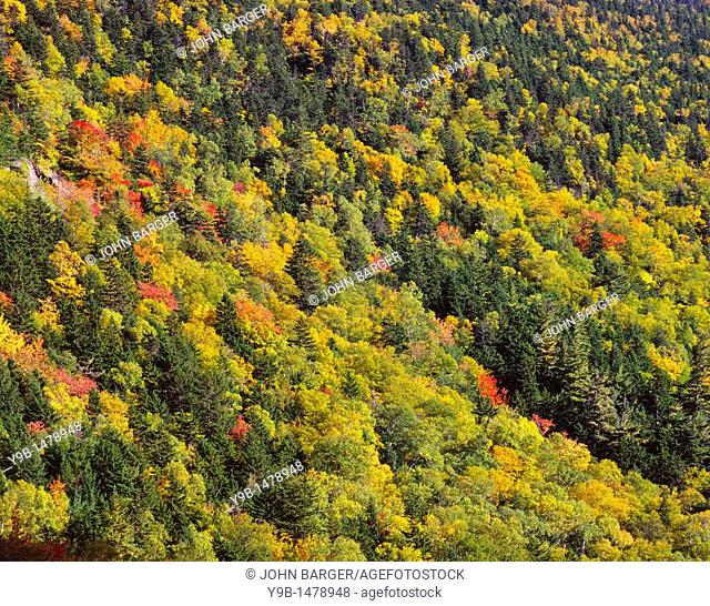 Conifers and fall-colored hardwoods cover slopes beneath Mt  Webster, White Mountain National Forest, New Hampshire, USA
