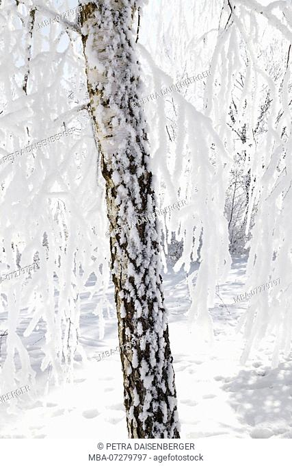 Close-up of a tree trunk in winter, with ice and snow