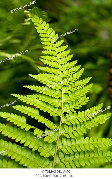 Close-up of bright green fern