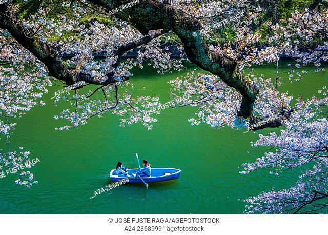Japan, Tokyo City, Kudanshita area, Cherry blossoms