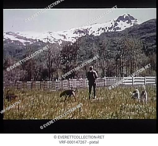 Rear view of hunter walking through field with dogs