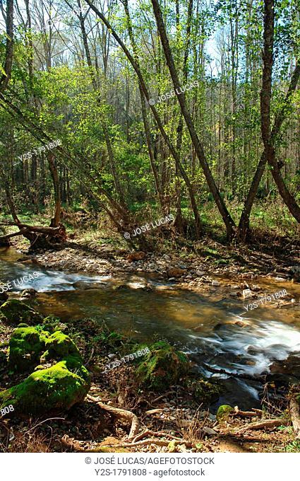 Sierra Norte de Sevilla Natural Park, The river Hueznar and gallery forest, San Nicolas del Puerto, Seville-province, Spain
