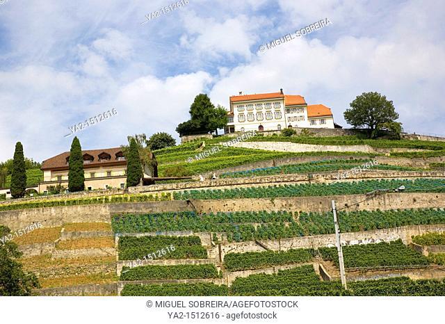 Lutry Hillside in Switzerland