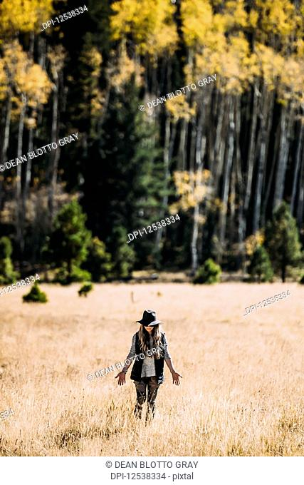 A woman walks across a field of golden grass towards a forest, Lockett Meadow; California, United States of America