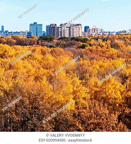 urban buildings on autumn forest edge